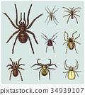 spider vector illustration 34939107