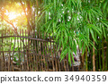 bamboo leaf with bamboo fence rural 34940359