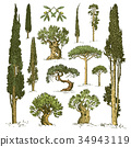 tree, vector, nature 34943119