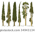 tree, vector, nature 34943134
