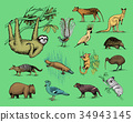 animal, vector, illustration 34943145