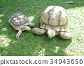 Family Small and Giant Tortoise on Background 34943656