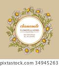 chamomile, frame, vector 34945263