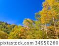 ภูเขาฟูจิ,ภูเขาไฟฟูจิ,ต้นเมเปิล 34950260