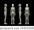女性骨骼CG黑色背景 34950268
