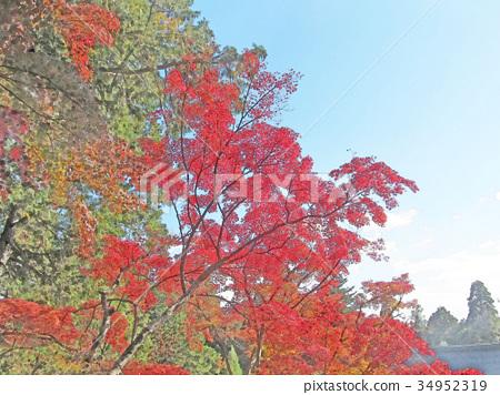 Jingo-ji秋葉 34952319