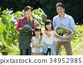 가족 농업 야채 밭 어린이 농업 체험 이미지 34952985