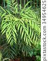 식물, 잎, 이파리 34954625
