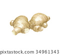 姜 蔬菜 水彩 34961343