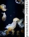 水母 海蜇 美杜莎 34965817