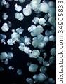 水母 海蜇 美杜莎 34965833