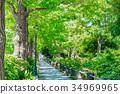 [가나가와 현] 가로수 길 34969965