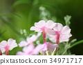 开花的草药 34971717