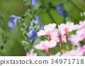 开花的草药 34971718
