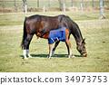 horse, parenthood, parent and child 34973753