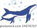 鲸鱼 矢量 座头鲸 34976767