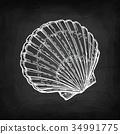 scallop, shell, shellfish 34991775