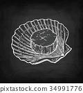 scallop, shell, shellfish 34991776