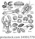 seafood, sketch, vector 34991779