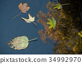 yellow maple leaves floating on the water 34992970