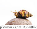 snails on white background 34996042