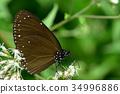 보라색 나비 34996886