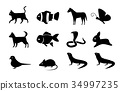 Set of animal icons in silhouette style, vector 34997235