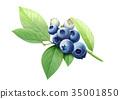 藍莓 水彩畫 水果 35001850
