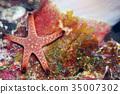 海膽海星 35007302