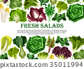 Salad leaf, vegetable greens banner border design 35011994