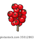Red mistletoe berries, Christmas holly berry 35012863