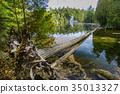 Rockwood conservation area 35013327