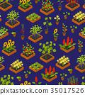 植物 花朵 花 35017526