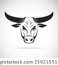 bull, head, animal 35021551