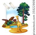 scene, giraffe, safari 35022909