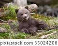 หมี,สัตว์,สัตว์ต่างๆ 35024206