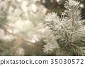 Snow-covered fir tree 35030572