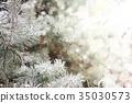 Snow-covered fir tree 35030573