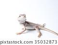 爬行動物 爬蟲類的 蜥蜴 35032873