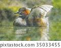 นก,แหล่งน้ำ,สระน้ำ 35033455
