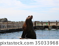 諸星水族館 庫頁冷杉 北海獅 35033968