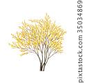 asiatic dogwood, spring baikal skullcap, deciduous broad-leaved tree 35034869