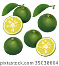 水果 橫截面 橫斷面 35038604