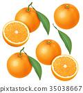 橙色 橘子 橙子 35038667