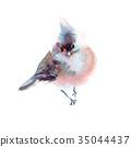 Winter fluffy soft bird hand drawn watercolor 35044437
