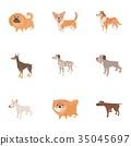 pet dog icon 35045697