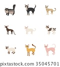 宠物 图标 矢量 35045701