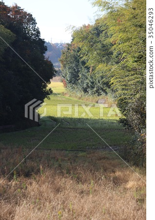 Country landscape 35046293