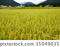 Paddy fields of Echigo Yuzawa 35049035