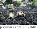 野生 山羊 歷史建築 35051681